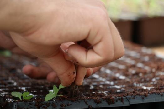 Yalova'da engelleri bitki yetiştirerek aşıyorlar