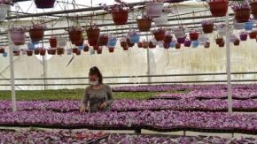 Yalova çiçek üretiminde hareketlenmeye başladı