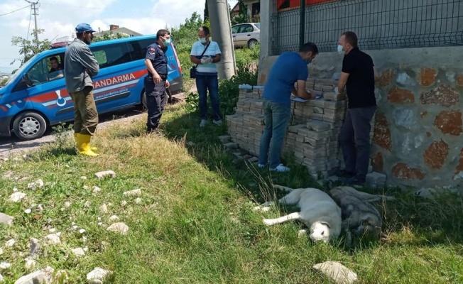 Çiftlikköy'de köpekler katledildi