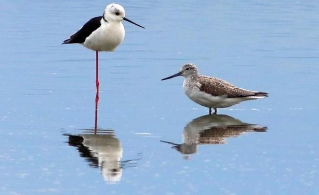 Hersek Lagünü yazı 235 kuş türüyle karşıladı