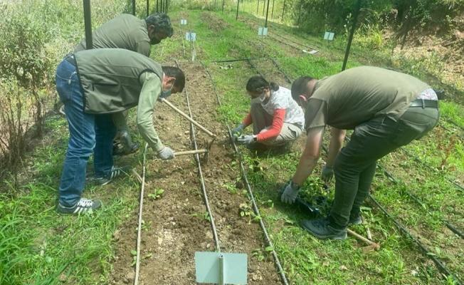 Yalova'da 28 adet endemik bitki türü dikildi