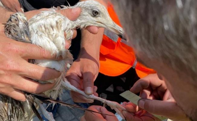 Yalova'da ağa takılan martı kurtarıldı