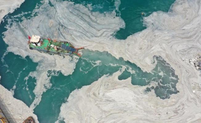 Yalova'da ilk gün 10 ton salya temizlendi