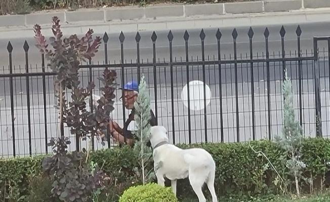 Bakan Selçuk sosyal medya hesabında köpeğe gazete okuyan vatandaşı paylaştı