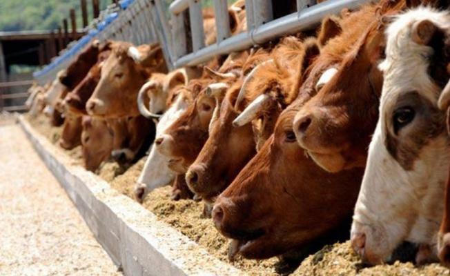 Hayvancılık Yatırımlarına % 50 Hibe Desteği Verilecek