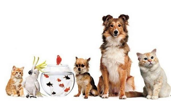 Hayvanları Koruma Kanunu teklifi komisyonda kabul edildi