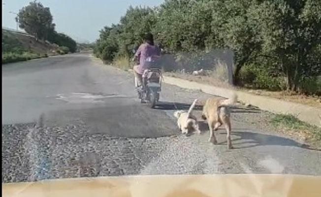 Köpeğe eziyet eden Suriyeli'ye 1033 TL para cezası