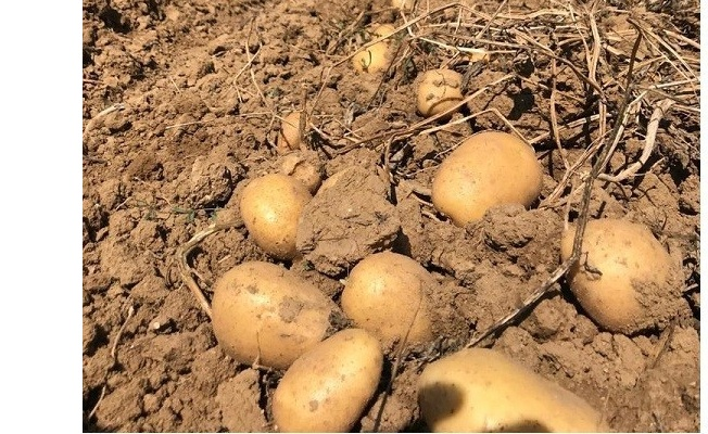 Yalova bölgesinde en çok etek ve patatesin fiyatı arttı