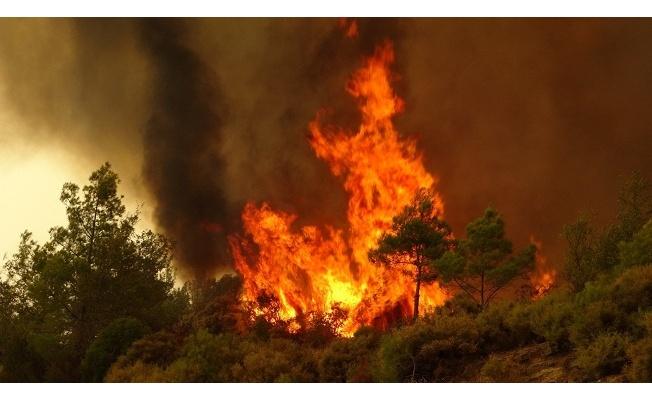 Yalova'da ormanlık alana girmek 1 aylığına yasaklandı!