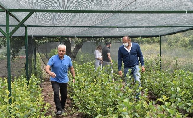 Yalova Türkiye'ye tanıttı, Ankara Büyükşehir Belediyesi destek sağlıyor