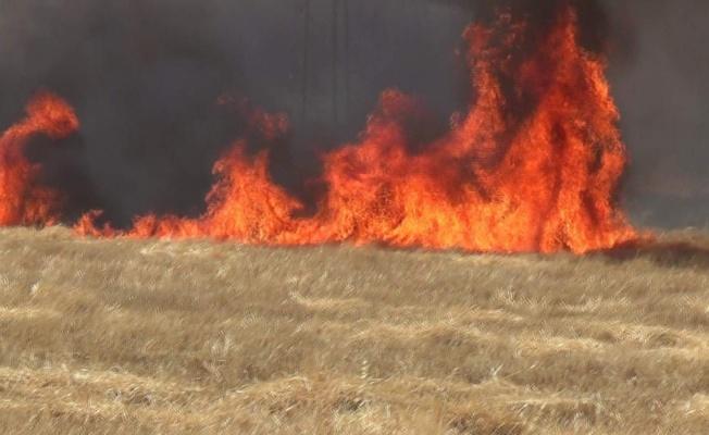 Yalova'da anız yangınları uyarısı!