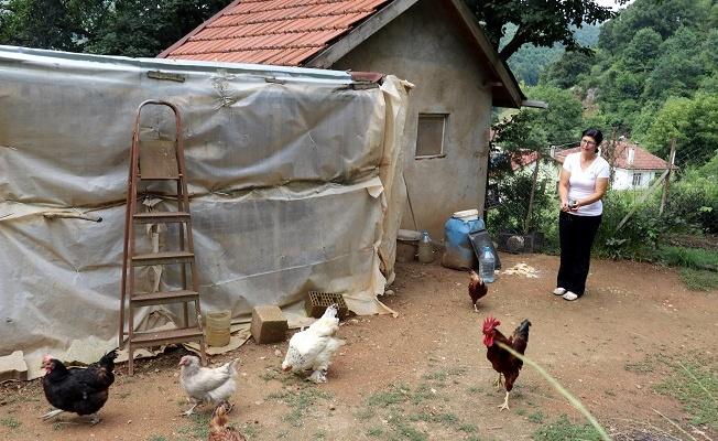 Yalova'da iş yerini kapatıp köye yerleşti