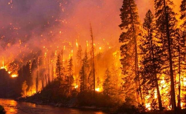 Yalova'ya Orman Yangını Uyarısı!
