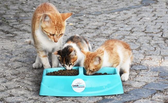 Bunaltıcı yaz sıcaklarında sokaktaki canlara destek