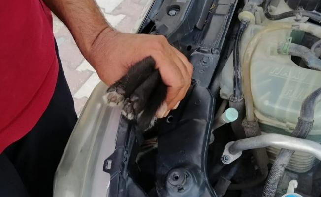 Çiftlikköy'de aracın motoruna giren kediyi itfaiye kurtardı