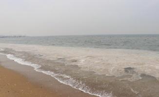 Yalova sahilindeki beyaz tabakanın nedeni belli oldu