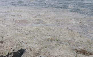 """Yalova sahilinde """"deniz salyası"""" kabusu"""
